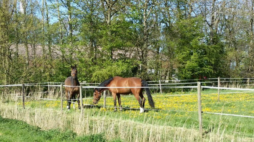 stro voor paarden